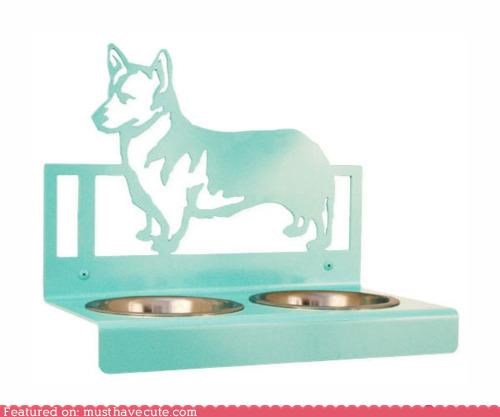 bowls corgi dogs feeding food - 4624727040