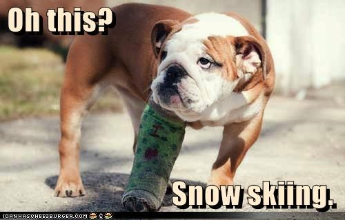 borked,broken,bulldog,cast,excuse,explanation,injury,leg,reason,skiing,snow,this