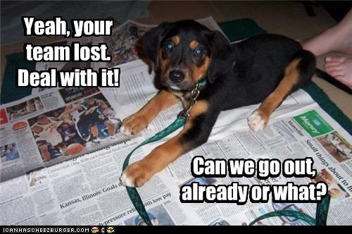 beagle,Deal With It,go,headline,impatient,lost,news,newspaper,out,puppy,question,team