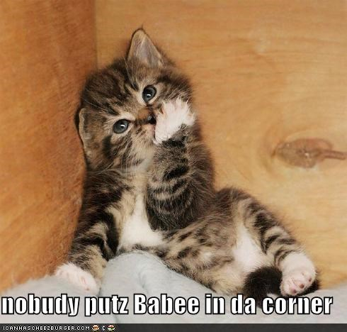 baby,caption,captioned,cat,corner,Hall of Fame,kitten,nobody,quote