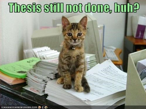 caption captioned cat condescending FAIL Hall of Fame incomplete kitten not done paper pile question stack still thesis - 4625343232