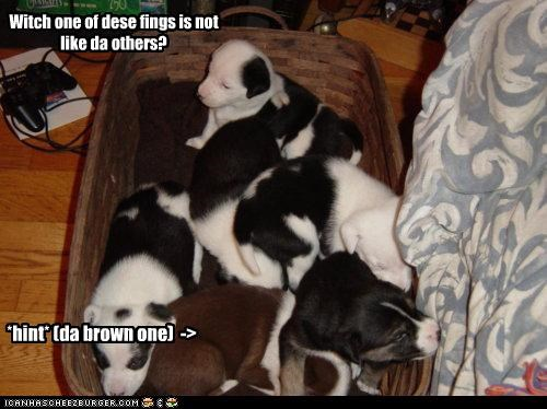 Witch one of dese fings is not like da others? *hint* (da brown one) ->
