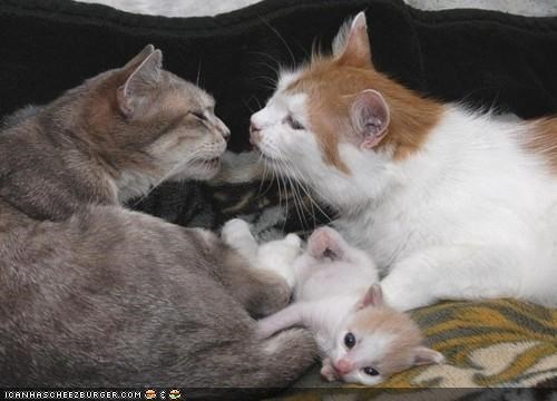 baby,cyoot kitteh of teh day,dad,family,KISS,mom,together