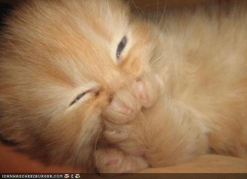cyoot kitteh of teh day gross ick orange paw stinkym smell - 4625724928