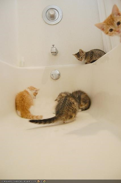 bath,bathroom,bathtub,cyoot kitteh of teh day,lots of cats