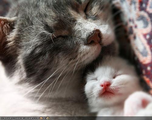 baby cyoot kitteh of teh day family mom newborn Precious tiny - 4625725696