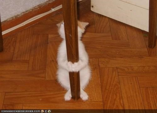 cyoot kitteh of teh day,dirty,job,pole,pole dance,standing,stripper,table,table leg