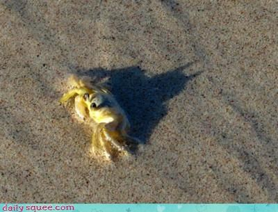 acting like animals batman beach crab Hall of Fame Pareidolia quote shadow silhouette the dark knight - 4625893376
