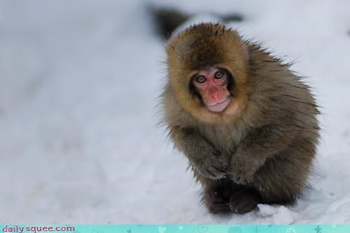 bowing domo arigato japanese macaque macaque manners monkey polite snow monkey thank you wishing