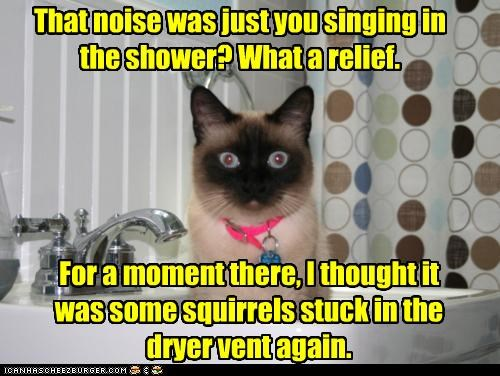 again,caption,captioned,cat,confused,dryer,human,insult,noise,relief,relieved,sarcasm,shower,siamese,singing,squirrels,stuck