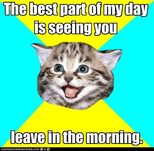 coffee day happiness Happy Kitten kitten leaving morning after Sad - 4627391232