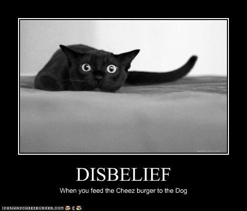 Cheezburger Image 4627422464