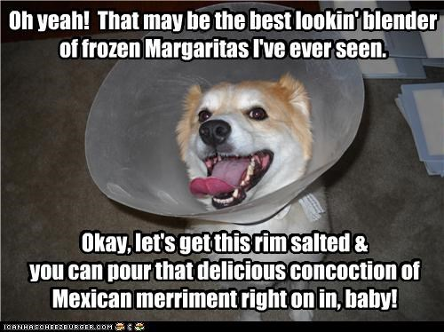 alcohol,cone of shame,corgi,delicious,directions,do want,drink,excited,instructions,margaritas,merriment,pragmatism,preparing,RIM,salt