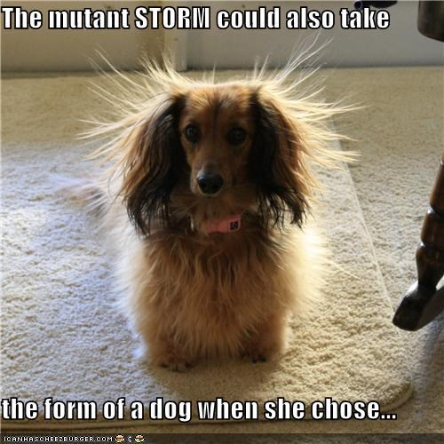 at will,choosing,dachshund,form,long haired,mutant,static,storm,x men