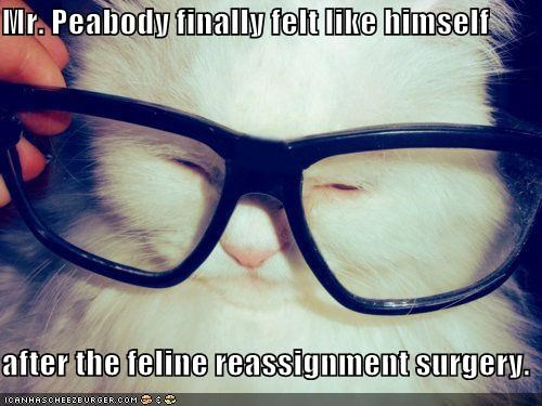 caption captioned cat feeling feline felt finally glasses himself kitten reassignment surgery - 4628171776