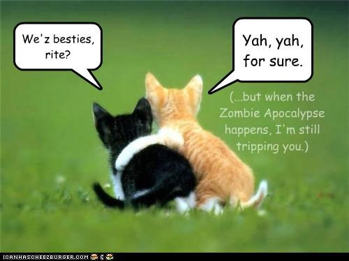apocalypse best friends best of the week caption captioned cat Cats caveat conditional friends friendship Hall of Fame kitten love tabby zombie - 4629003008