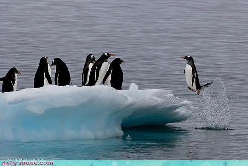 acting like animals apology jumping krill late leaping penguin penguins running behind water - 4629125376