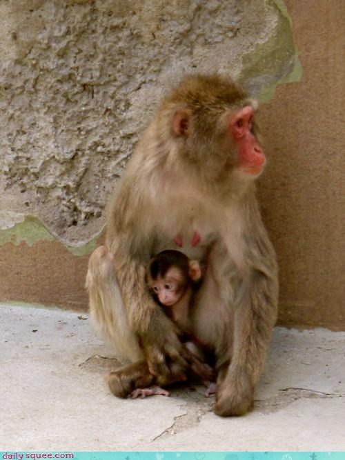 baby crime grounded monkey monkeys mother noms punished punishment wrongdoing