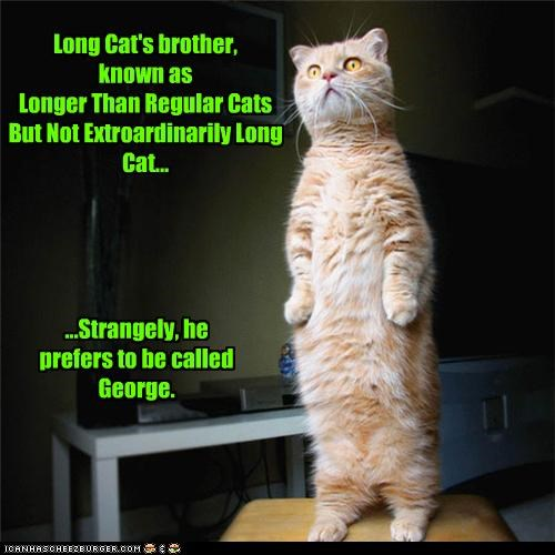 aka,brother,caption,captioned,cat,George,longcat,name,preference,strangely,tabby