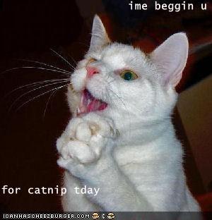 ime beggin u  for catnip tday