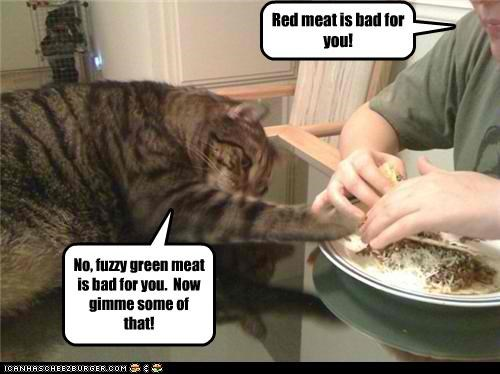 bad caption captioned cat disagree do want fuzzy gimme green meat noms red meat - 4629954304