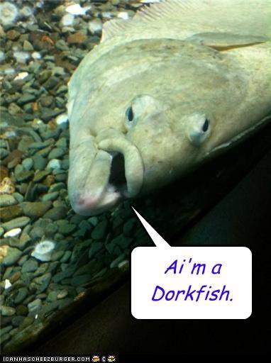 Ai'm a Dorkfish.