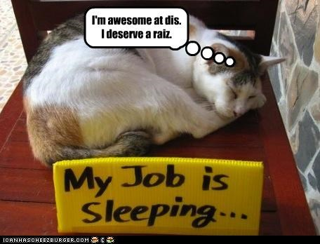 awesome caption captioned cat deserve job raise sleeping - 4630794752