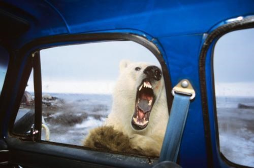 Damn Nature U Scary get in the car I Can Has Cheezhuman Sponsored By Coca-Cola When Animals Attack - 4630927104