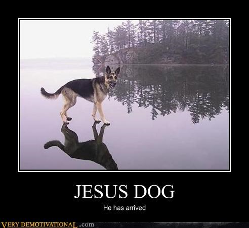 dogs jesus walking water - 4631056384