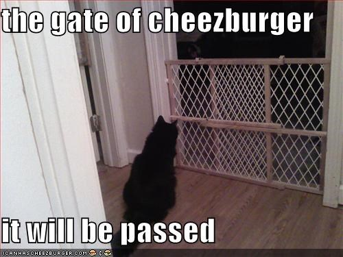 Cheezburger Image 4631069696