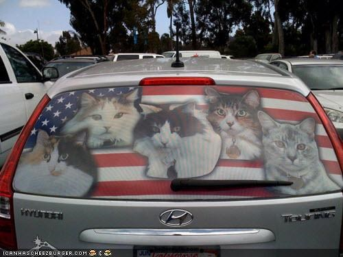 car cars crazy cat lady decals stickers - 4631392512