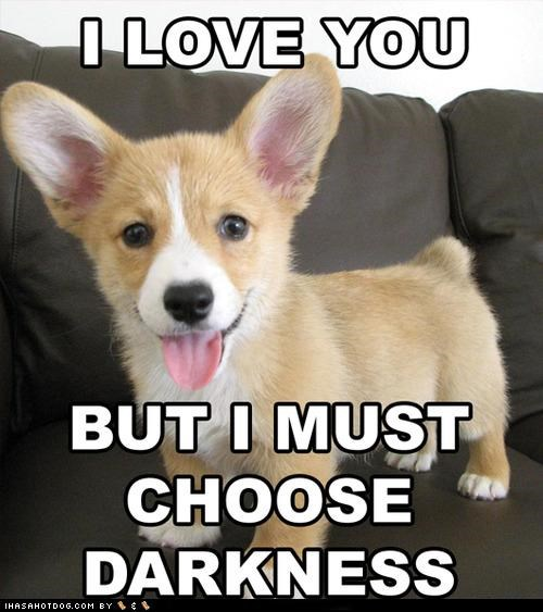 corgi,darkness,lol,love