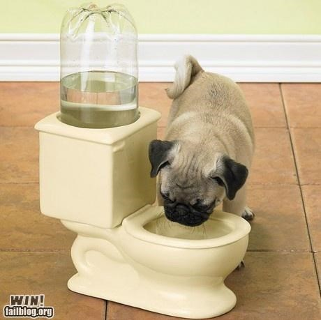 animals,clever,dogs,pets,products,toilets