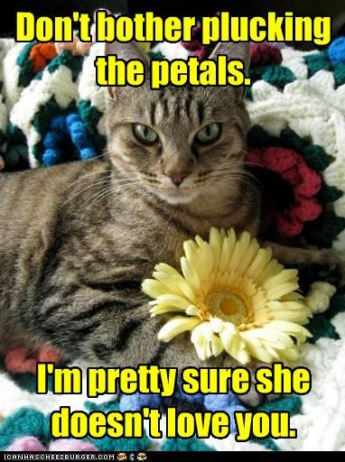 caption captioned cat cruel doesnt dont-both honest love mean opinion petals plucking Sad Sure