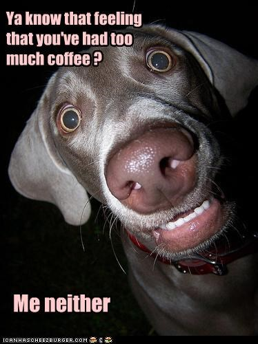 best of the week caffeine coffee feeling Hall of Fame hyper hypothetical i has a hotdog Me Neither question too much weimaraner - 4631775488