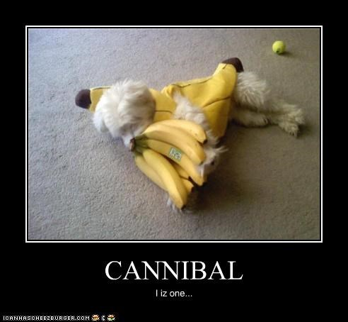 banana bananas cannibal cannibalism costume dressed up i am west highland white terrier