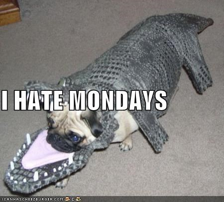 best of the week confused costume crocodile do not want dressed up Hall of Fame hate i has a hotdog monday mondays pug wtf