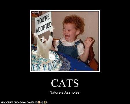 CATS Nature's Assholes.