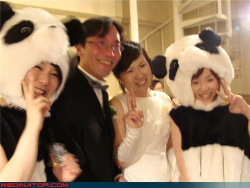 bride,funny wedding photos,groom,panda