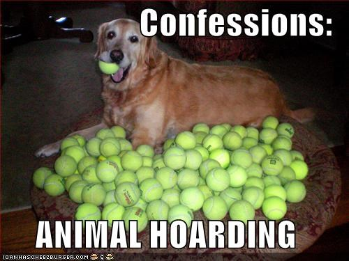 ball,balls,confessions,golden retriever,hoard,hoarding,tennis ball