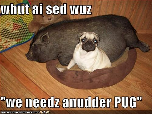 another hearsay misheard misinterpretation mistake need pig pug said similar sounding