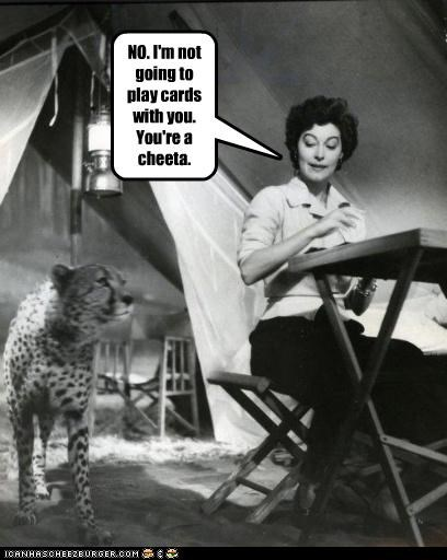 animal cheetah funny historic lols Photo wtf - 4632787968