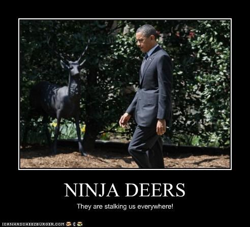 animals,barack obama,political pictures