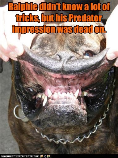 bulldog,dead on,didnt,doing it right,impression,know,lot,Predator,tricks