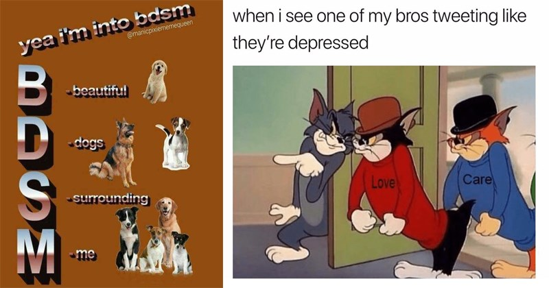 Wholesome and cute memes about dogs, cats, animals, love, friendship.