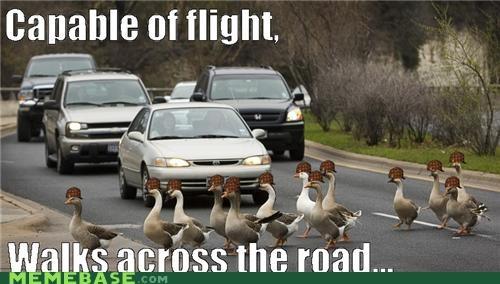 car crossing flight geese Memes - 4634586368