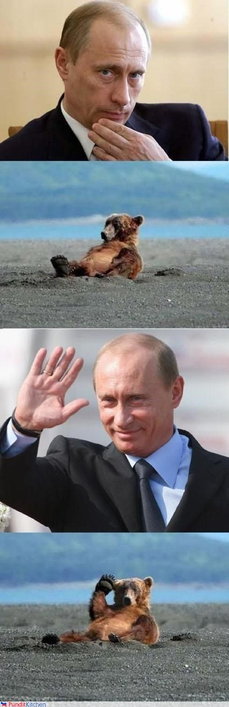bears,political pictures,Vladimir Putin,vladurday