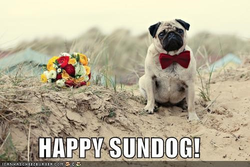 beach bowtie flowers happy happy sundog pug Sundog - 4635013120