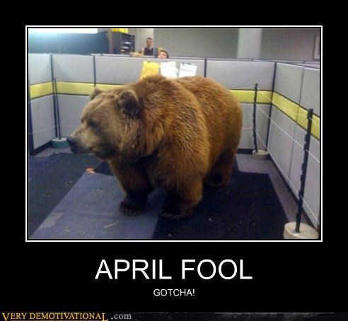 bear,huge,Office,prank,wtf