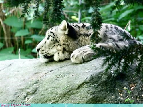 acting like animals laying down lazy leopard music video nostalgia remembering snow leopard song - 4636163840